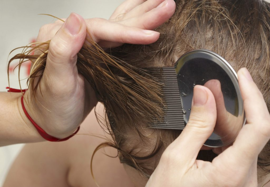 Tips to remove the lice from home